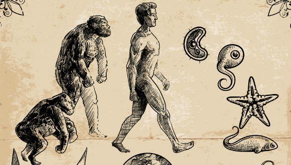 חוברת אבולוציה